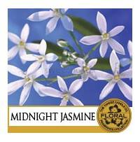 Midnight Jasmine